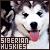 Siberian Huskies: