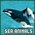 Sea Animals: