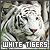 White Tigers: