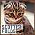Scottish Folds: