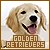 Golden Retriever: