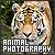 Photography : Animals: