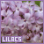 Lilacs: