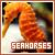 Seahorse: