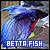 Betta Fish: