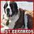 St Bernards: