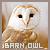 Barn Owls: