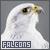 Falcons: