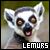 Lemurs: