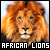 African Lions: