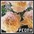 Peony: