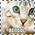 Bengal cats: