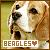 Beagles:
