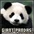 Giant Pandas:
